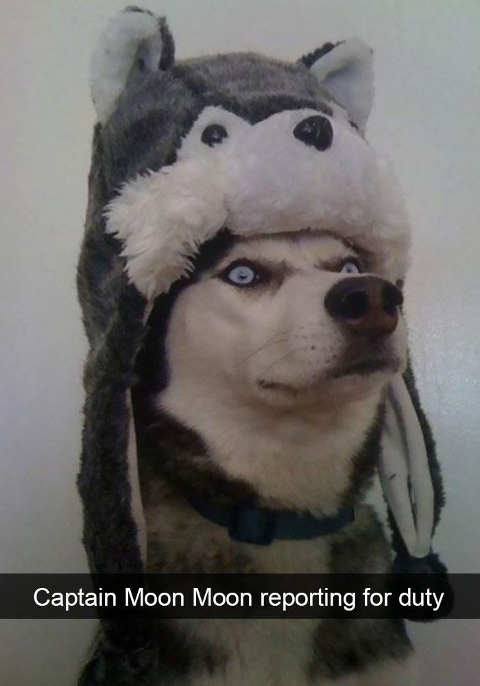 funny-husky-dog-posts-57-583448a3b14a3__700