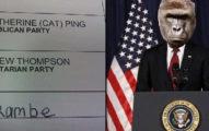 根據統計,美國總統大選至少有「上萬人投給」已故的大猩猩Harambe...