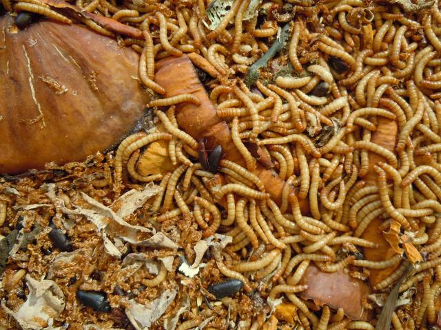 mealworms_punishment