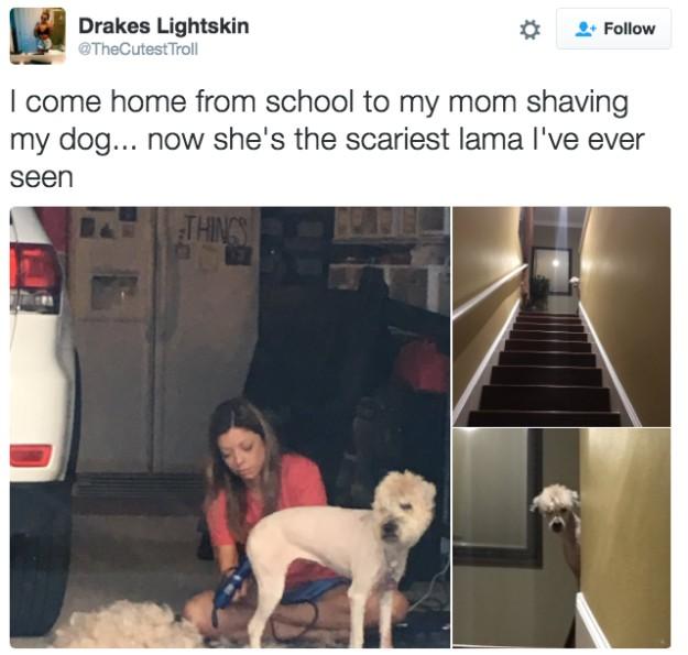 21張證明「狗狗根本完美到無法挑剔」的呆Q萌照 柯基誘人的不只屁股!