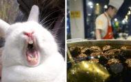 四川人最愛的「獨特吸腦宵夜」兔子頭,「超限制級吃法」連其他中國人都看得心驚驚!