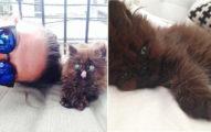 遊走在死亡邊緣的瘦弱小貓被細心照料,1年後「原來這麼美」讓人吃驚!