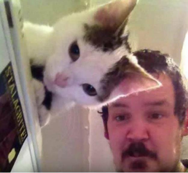 27張清楚讓愚蠢人類知道「貓咪是新世界的神」的爆笑照片