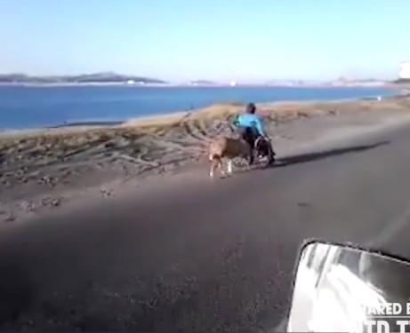 狗狗「用頭推輪椅」跟主人一起散步,感人影片已經擄獲100萬人的心!