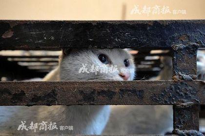 鄰居很常看到男子努力照顧流浪貓,沒想到他是「每天殘殺100隻貓咪」的殺貓魔!