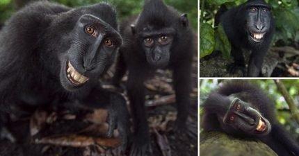 他們是世上最愛笑的動物 超有戲「全家團體照」會讓你以為是人類!(9張)