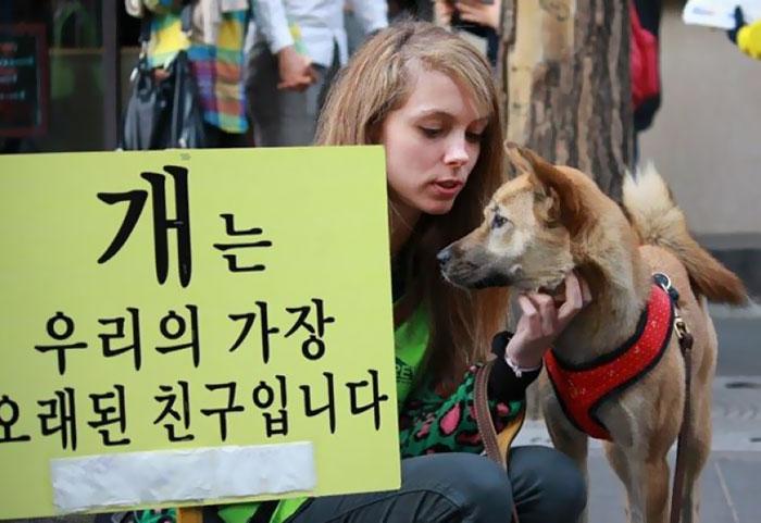 南韓政府強制關閉「每年屠殺8萬隻狗狗」最大狗肉市場,總數量讓人心痛吃驚!