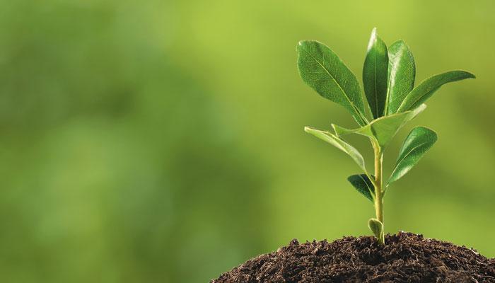 25個「讓你終於有智慧」的另一個角度超深奧真理。#7其實植物在養我們?