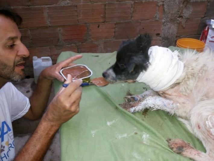 狗狗被熱水燙脖子上「一個大洞」,手指伸進去「一摳出來」噁心到發昏!