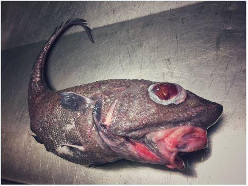 俄羅斯漁夫發佈他找到過的「20種海底異形生物」,#9密集恐懼症者慎入!