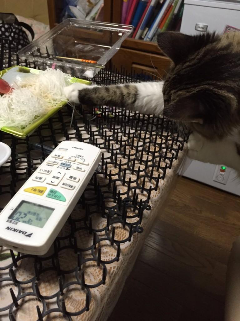 日本人拍下貓咪已經開始對「致命的刺墊」免疫的爆笑證據,證明人類的統治已經結束了!(20張)