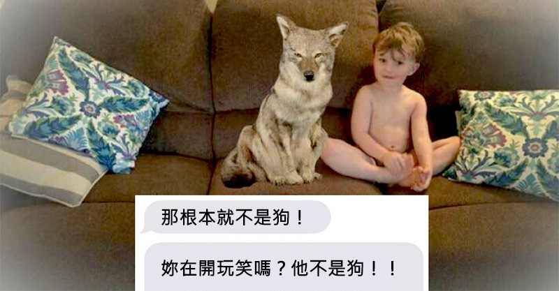 天兵老婆把危險的「土狼」誤認為「狗狗」堅持養在家,老公最後氣壞:「X,我恨妳!」