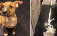 狗狗來不及直接慘尿在地板上,「主動咬衛生紙擦乾淨」萌翻網友!