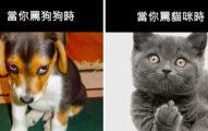 13張證明貓狗完全來自不同星球的「汪星人VS喵星人」巨大落差爆笑比對照。