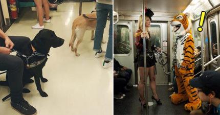 乘客不爽導盲犬上捷運嗆:「那我也帶訓練過的獅子老虎!」。網友興奮:「想看導盲猛獸上捷運!」