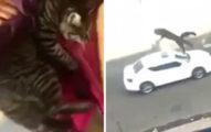 可惡女子邊笑邊將貓從3樓窗戶拋出後,可惡到影片被Youtube刪除...(非趣味影片)