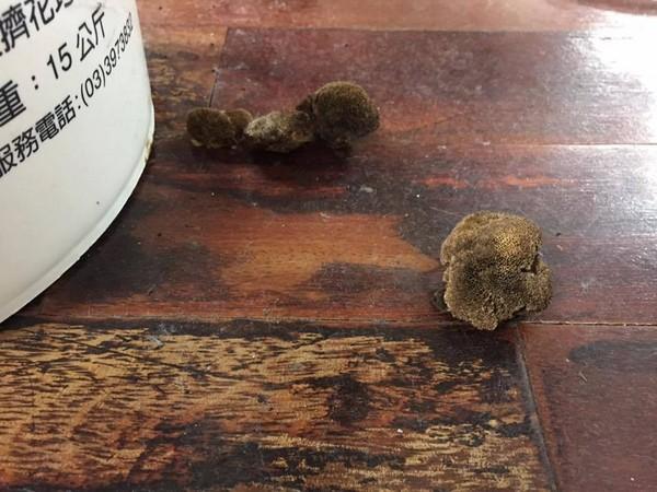 教室木地板長出「乾掉牛肚」,網友:「吃了就打通任督二脈。」