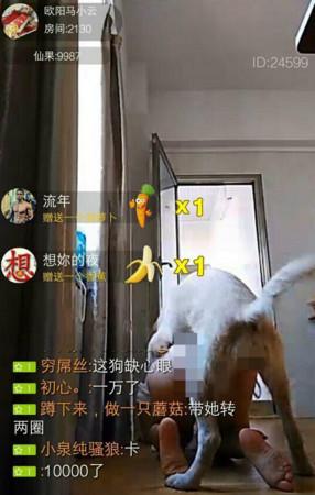 女主播為了宣傳App竟半裸趴地屁股抬高「與狗狗直播愛愛」!網友:「噁爆」、「狗狗好可憐」