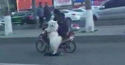 可能是肚子餓了,網友拍到超聰明的狗狗自己「騎車」出去找主人...(影片)