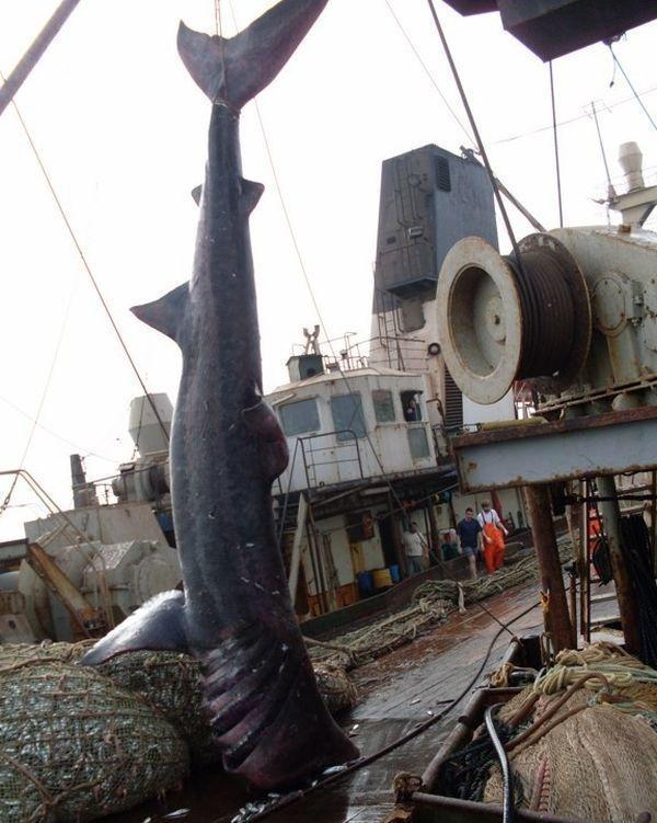 漁夫出海發現這次漁網「特別重」,奮力拉上岸「卻被大家罵翻」!