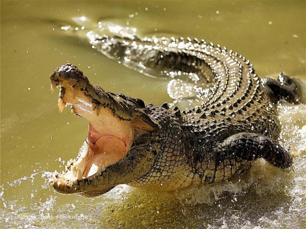 三兄弟為了治療陽痿跑去「硬上鱷魚」卻慘遭活生生吞掉!網友:「為了下半身, 沒了下半生。」