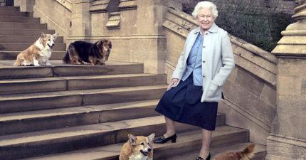 曾幫女王照料狗狗30年老員工去世,伊莉莎白女王決定「照顧他的毛小孩」一輩子!