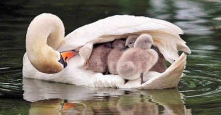 16張讓你內心暖烘烘「母愛存在於所有生物上」感人媽媽寶寶互動照!