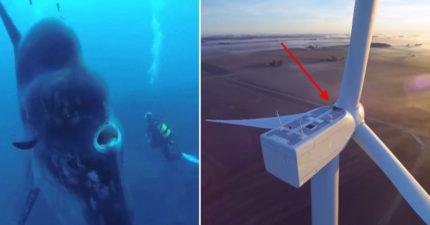 18張照片證明「巨物恐懼症」比密集恐懼症還要恐怖!#16在鯨魚寶寶旁時...