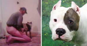 怪癖男子把母狗「寶貝女孩」當性奴「3年性侵超過100次」,狗狗到最後眼淚都沒有了...(非趣味)