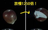 放慢1250倍,人類終於首次看到玉米→爆米花的驚人「另一個次元過程」!(影片)