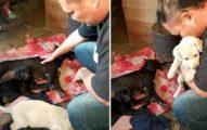 狗媽媽「全身僵硬」在死亡邊緣徘徊2天,「看到7個孩子安全了」才放心斷氣。
