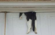 車庫前驚見「卡著半截貓」,連忙救下來「打擾了他」笑壞趕來救援的鄰居!
