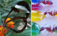 30種「上帝忘記上色」的夢幻透明動物。#6龜甲蟲最美!