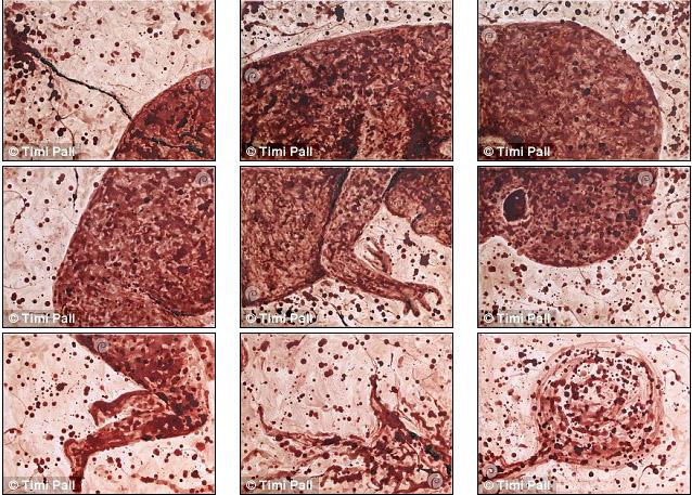 女藝術家花9個月「用自己經血」畫出未開始的生命,表示意識到「月經的價值」。