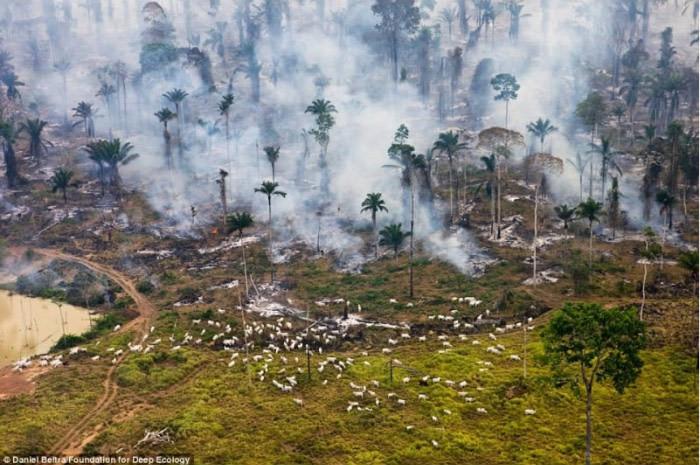 23張證明地球已經「癌症末期」的悲慘照片。#18人類永遠學不乖...