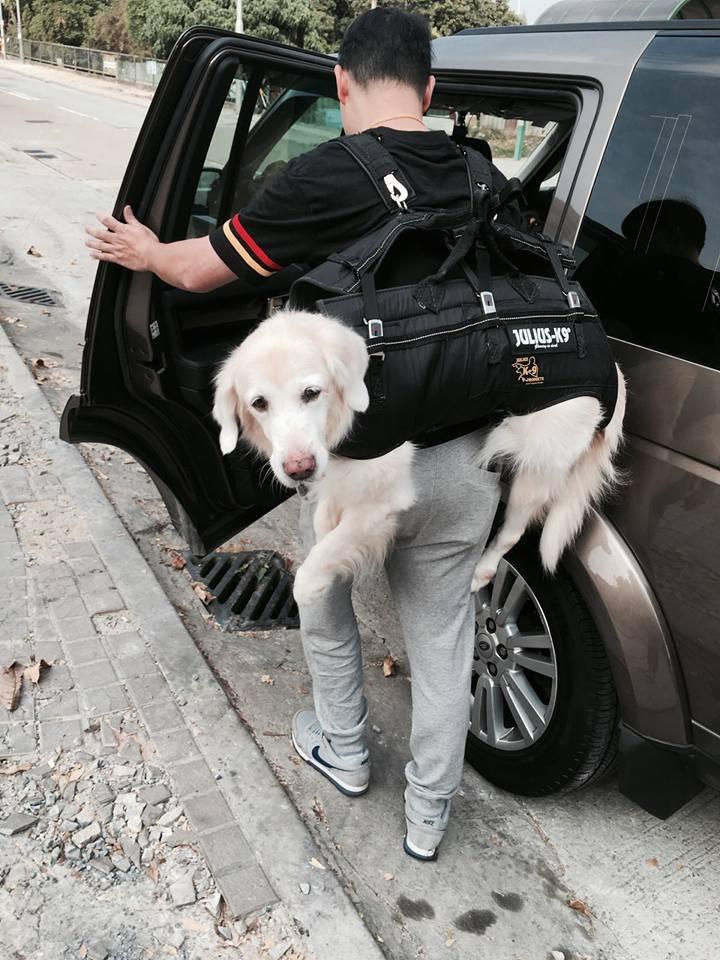 癱瘓黃金犬從小被拋棄,萬能俠爸爸收編「揹24kg上山下海」最甜蜜的重量!