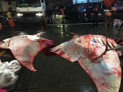 保育動物「鬼蝠魟」難得游來台灣卻遭「合影殺害」!得知「活的價值三千萬」後藍瘦香菇了...