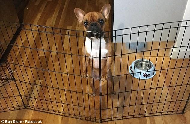 3年花500萬!善心夫妻救狗「只能吃老本過生活」 被鄰居笑卻回:牠也是一條生命
