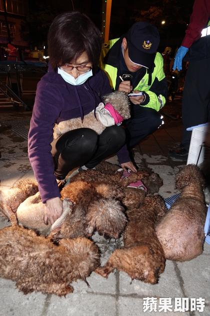 板橋寵物店發生大火,消防員對小狗「嘴對嘴CPR」搶救,隊長:「不可以讓牠們死掉!」
