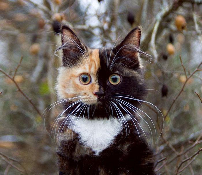 11張媽媽生到一半沒墨水「超萌黑橘雙色臉貓照」,#10「白色圍兜兜」秒融化!