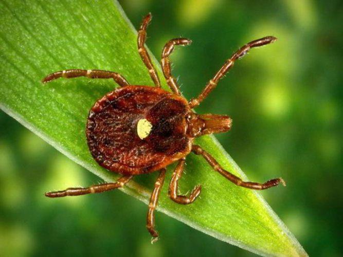 只要被這種小蟲子咬到一口,你下半輩子就會「被迫不能吃肉」!