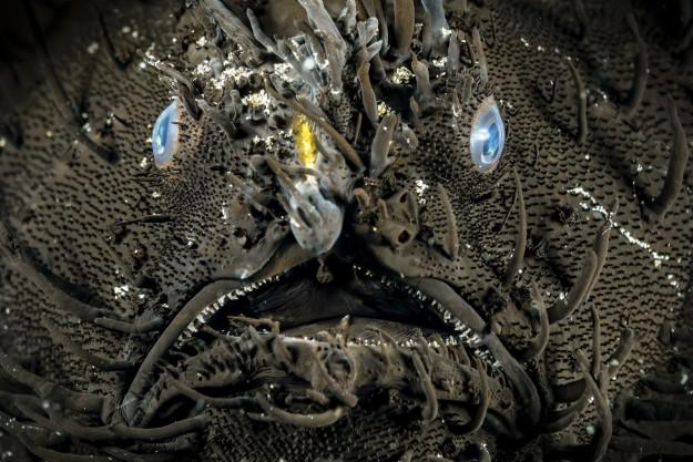 22種課本上沒教但真實存在世界上的「超乎想像恐怖奇異生物」。