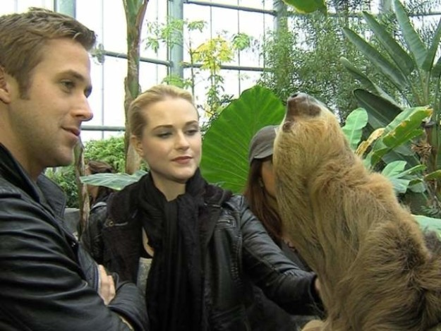 Ryan Gosling with a sloth: