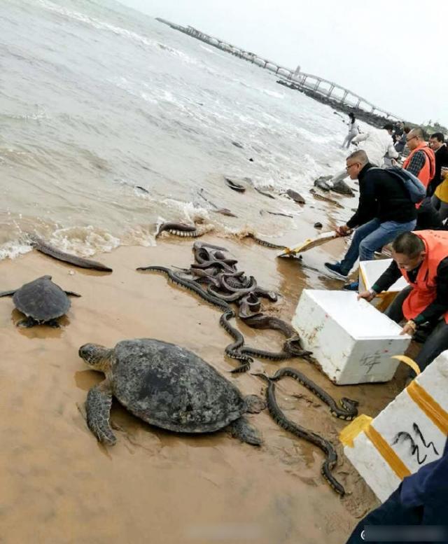 中國僧人為積德「把蟒蛇放生到海裡」,消防趕來發現「沙灘大悲劇」把泳客嚇哭...