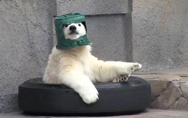 Holiday Of Polar Ranger