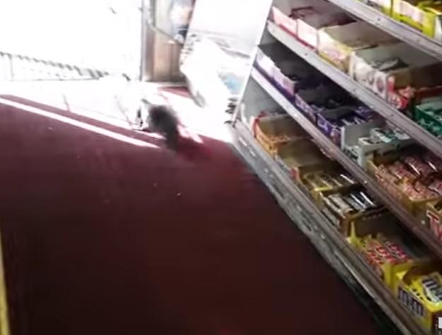 商店驚見「神秘巧克力大盜」 老闆女兒無奈:5年來已損失40多條!