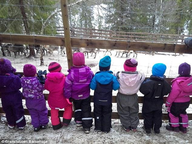 幼稚園讓5歲童「看馴鹿被屠宰剝皮」認為重要教育,被批貧園長強硬表示:「還會再做一次。」