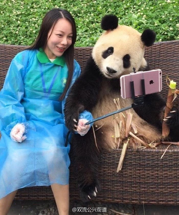 只要來這個熊貓園區...你就可以跟「自拍等級:神級」的爆萌熊貓一起讓大家羨慕死!