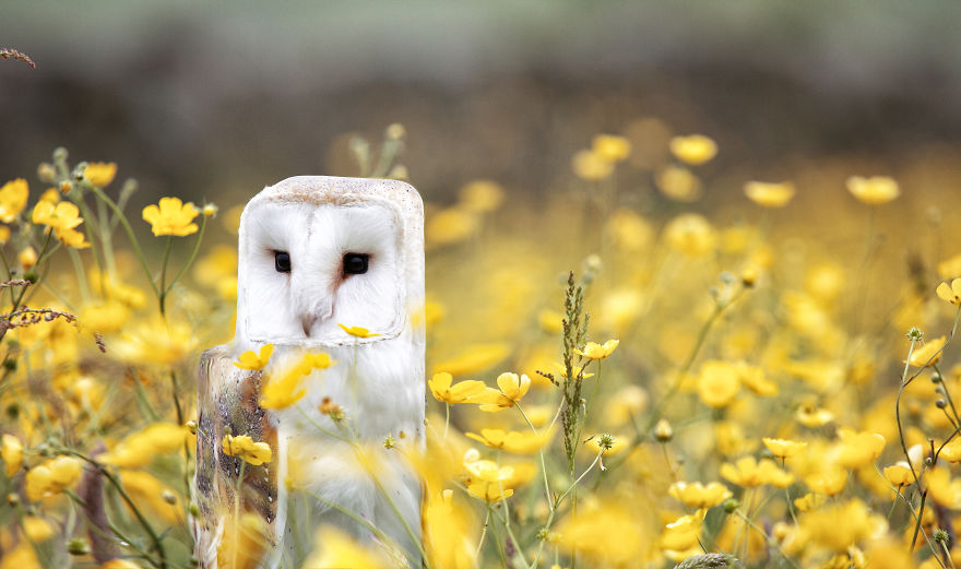 24張證明「正方形比圓形可愛N倍」的爆笑方塊臉動物照片!