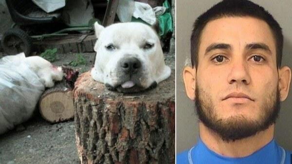 28歲殘忍男為驅魔「用斧頭把狗狗活生生砍頭」慘死,他說:「他看了我一眼。」